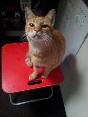 Eine rothaarige Katze sitzt neugierigen Blickes auf einem roten Hocker